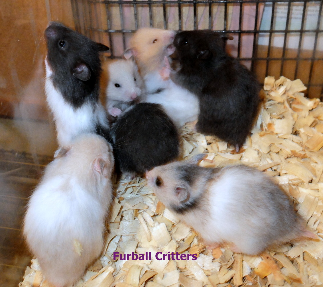 baby-hamsters7