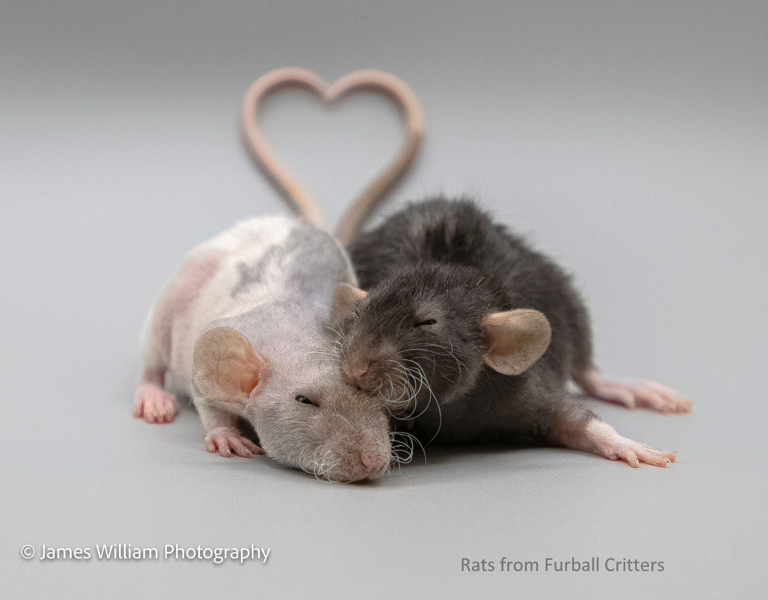 calendar rat heart3